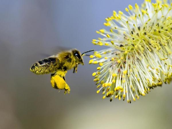 Другие продукты пчеловодства